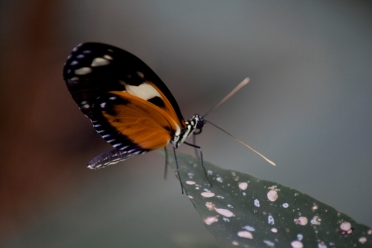 A butterfly - Chester Zoo